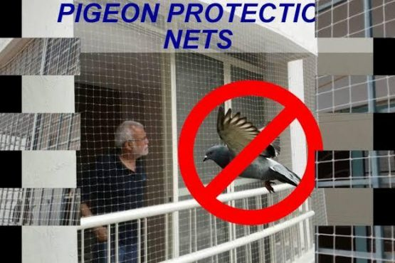 Anti Pigeon Net in Jaipur