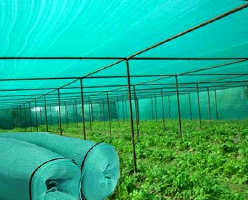 Green Shade Net Dealer in Jaipur